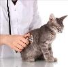 Ветеринарные клиники в Лузе